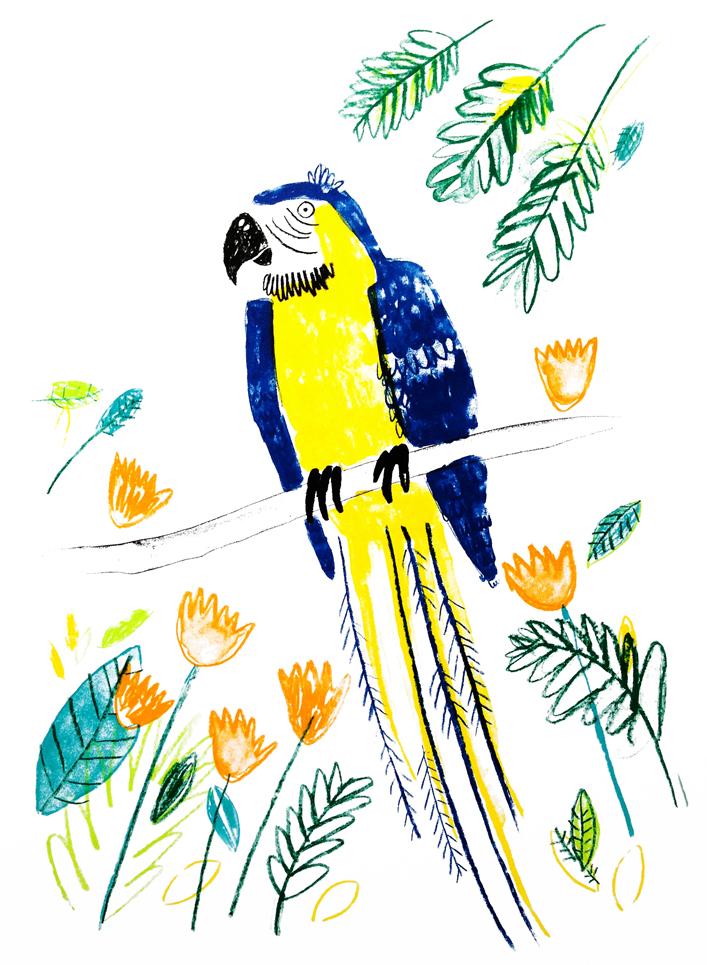 Parrot_web_Lorna_Scobie_900